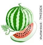 watermelon. | Shutterstock . vector #79431826