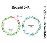 plasmid and recombinant dna.... | Shutterstock .eps vector #794366641