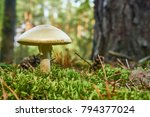 harmful fungi growing in the... | Shutterstock . vector #794377024