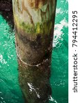 Small photo of Pier dock pole halfway in turquoise water close up in Marlborough Sounds, New Zealand.