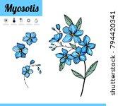 Primrose Bulbous Flower...