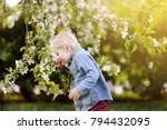 Small photo of Cute little boy enjoy blooming tree with white flowers in the domestic garden in warm day. Seasonal kid allergy/atopy