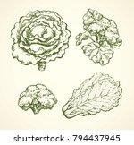 ripe raw fresh brassica... | Shutterstock .eps vector #794437945