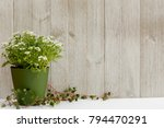 Flowering Green Plant In A...