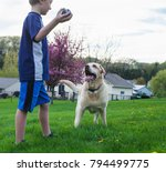 boy playing with her dog... | Shutterstock . vector #794499775