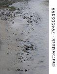 alaska coastal beach | Shutterstock . vector #794502199