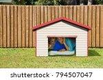 husband or boyfriend man...   Shutterstock . vector #794507047