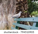 Turtle Dove In A Park Bench