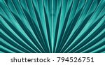 striped of palm leaf  abstract... | Shutterstock . vector #794526751