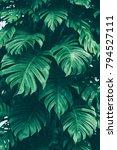 tropical jungle foliage  dark... | Shutterstock . vector #794527111