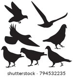 pigeons silhouette isolated | Shutterstock .eps vector #794532235