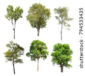 collection of isolated trees on ... | Shutterstock . vector #794533435