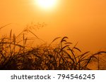 morning surise  with the grass... | Shutterstock . vector #794546245