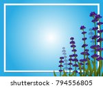 border template with lavender... | Shutterstock .eps vector #794556805