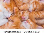 Stock photo a lot of small sleeping red kittens sleep in a heap nestle to each other in a cozy bed the concept 794567119