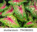 leaves with natural light...   Shutterstock . vector #794580301