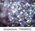 ower grass flower with sunset...   Shutterstock . vector #794580511