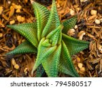 cactus growing and strong   Shutterstock . vector #794580517