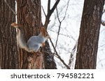Squirrel In A Winter Coat Sits...