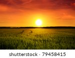 Sunset Above Barley Field