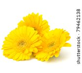 Beautiful Daisy Gerbera Flower...