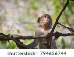 Monkeys In Thailand Khao Hin...
