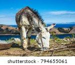 donkey on isla del sol ... | Shutterstock . vector #794655061