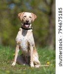healthy purebred dog... | Shutterstock . vector #794675185