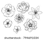 ink  pencil flower sketch... | Shutterstock .eps vector #794691034