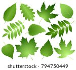 hand drawn green leaves and... | Shutterstock . vector #794750449