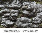 brittle cinder fungus ... | Shutterstock . vector #794753359