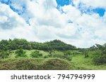 beautiful vibrant background... | Shutterstock . vector #794794999