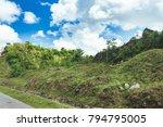 beautiful vibrant background... | Shutterstock . vector #794795005
