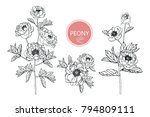 collection peony with line art...   Shutterstock .eps vector #794809111