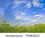 Dense Grass Declined Under A...