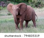 elephant facing the camera  | Shutterstock . vector #794835319