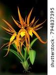 general view blooming brassada... | Shutterstock .eps vector #794837395