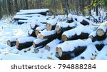 firewood in a woodpile in the... | Shutterstock . vector #794888284