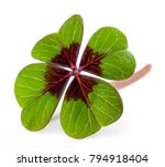Four Leave Clover Isolated  ...
