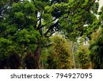 lush tropical forest with... | Shutterstock . vector #794927095