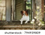 a small dog is sitting by ... | Shutterstock . vector #794939809