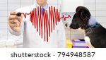 Stock photo veterinarian standing and drawing chart heartbeat 794948587