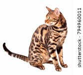 male bengal cat sitting down... | Shutterstock . vector #794960011