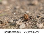 ant carrying a big seed | Shutterstock . vector #794961691