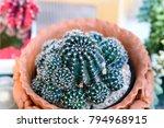 cactus in a pot | Shutterstock . vector #794968915