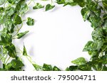 tropical leaves. green leaves... | Shutterstock . vector #795004711