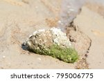 Rock Filled With Barnacle And...