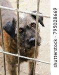 Shelter Homeless Dog In Kennel...