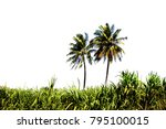 coconut tree on white background | Shutterstock . vector #795100015