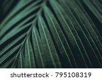 green leaves. low key modern... | Shutterstock . vector #795108319